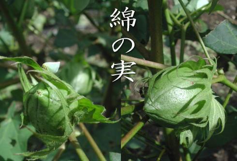 Watanomi1
