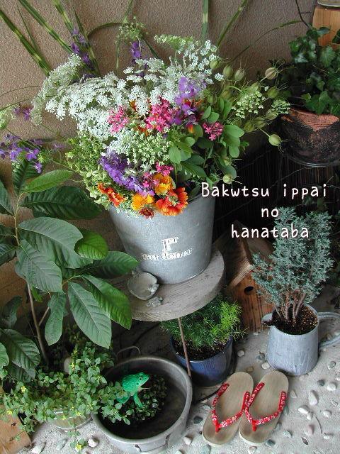 Hanataba2